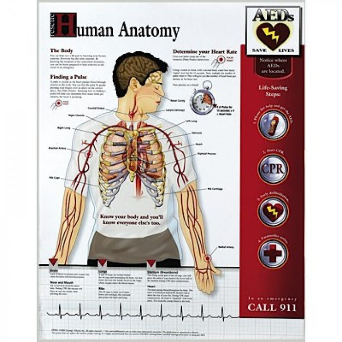 Human Rescue Anatomy Poster, 14\